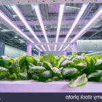Quel type de LED pour culture indoor ?